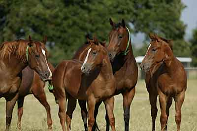 The Broodmares