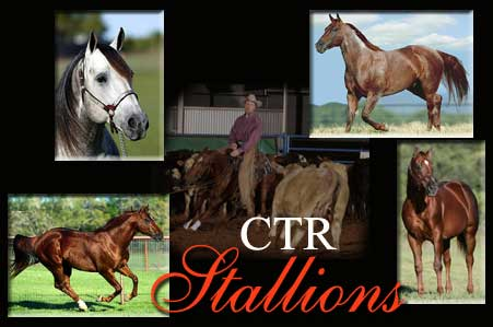 Stallions at Circle T Ranch